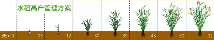 水稻高产管理方案