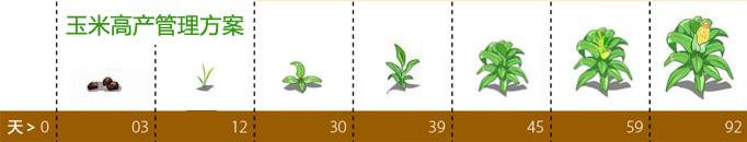 玉米高产管理方案